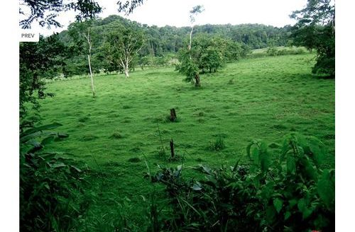 Mountain Farm with ocean view for sale in Quepos, Costa Rica!