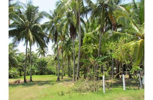 Beachfront Lot in the Central Pacific Region of Palo Seco, Costa Rica!